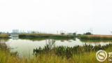 【美丽中国·网络媒体生态行】湿地好、乡村美,生态保护有良方